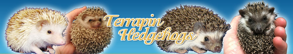 Terrapin Hedgehogs